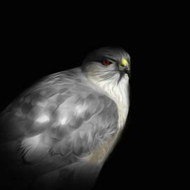 Hawk by William Moore