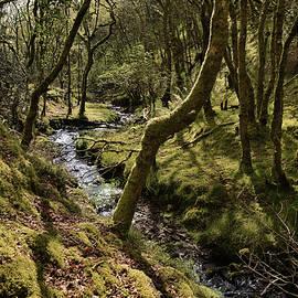 Hawkscombe Steam, Mossy Oak Forrest
