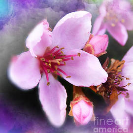 Hawthorne Blossoms. by Trudee Hunter