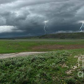Hayden Valley Storm by Sandra Bronstein