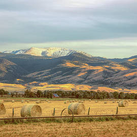 Hayfields in the Afternoon Light Montana by Jennie Marie Schell