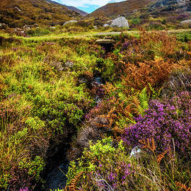 Heather along the Scottish Highlands by Debra and Dave Vanderlaan