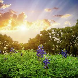 Heavenly Spring Bluebonnets by Lynn Bauer