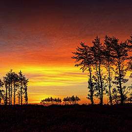 Hedgerow Sunrise by Marty Saccone