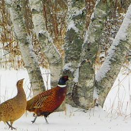 Hello dear birches by Karen Cook