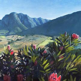 Hemel En Aarde Valley Proteas by Christopher Reid