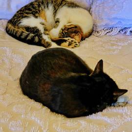 Hemingway's Cats by Cathy P Jones