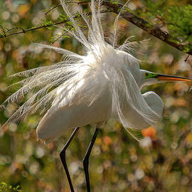 Her Majesty Great White Egret by TJ Baccari