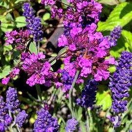 Herb Garden  by Michael Klahr