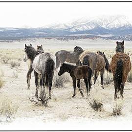Herd Wild Mustangs by Jerry Cowart
