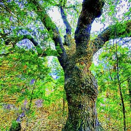 Heritage Tree by Cathy P Jones