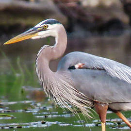 Heron 1 by Adria French