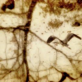 Heron Reflection by Francis Sullivan