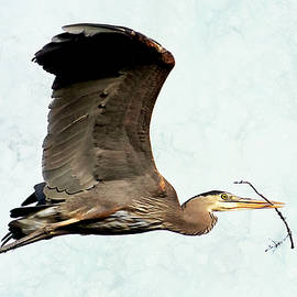 Heron with Branch for Nest by Peggy Collins