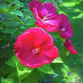 Hibiscus by George Moore