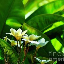 Hidden Plumeria by Craig Wood