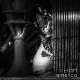 Hiding Spot by Flo Photography