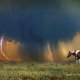 High Plains Storm Wild Horse by R christopher Vest