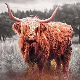 Highland Coo Selective Color  by Carol Japp