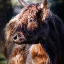 Highland Cow III by Athena Mckinzie