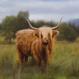 Highland Cow by Susan Foster