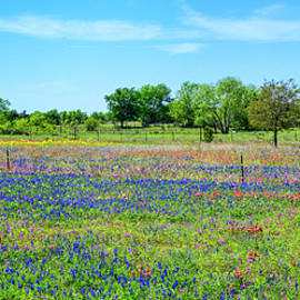 Hill Country Pastel Panorama by Lynn Bauer