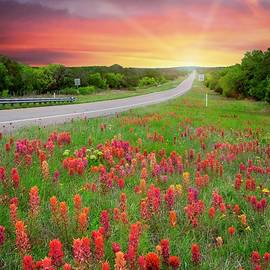 Hill Country Prairie Paintbrush at Sunset by Lynn Bauer