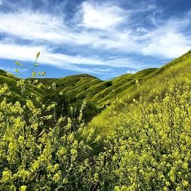 Hills of Gold by Joseph Schofield