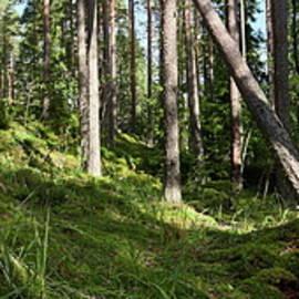 Hillside panorama. Seitseminen National Park by Jouko Lehto