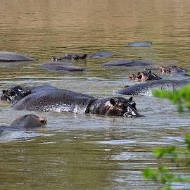 Hippo in Mara River by Marta Kazmierska