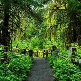 Hoh Rainforest Fenced Trail by Scott Cunningham