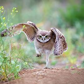 Hold on, I'm comin' by Judi Dressler