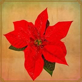 Holiday Cheers by Barbara Zahno