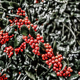 Holly Selective Color by Sharon Popek