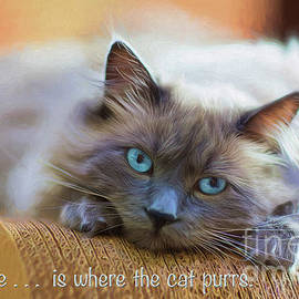 Home Is Where The Cat Purrs by Sharon McConnell