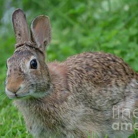Honey Bunny by Linda Howes