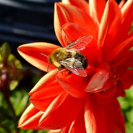 Honey Yield by Lyuba Filatova
