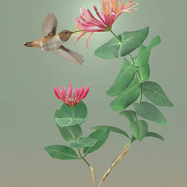 Honeysuckle and Hummingbird by Spadecaller