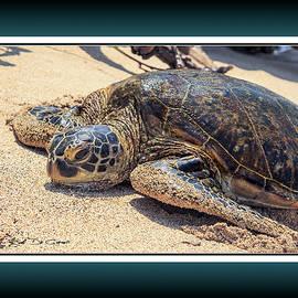 Honu or Hawaiian Green Sea Turtle on the shore in Hawaii by Rob DeCamp