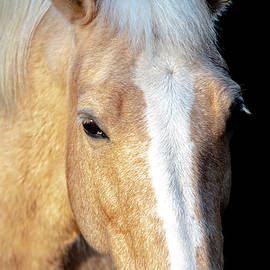 Horse 3 by Philip Rispin