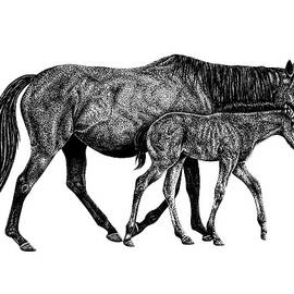 Horse and foal ink illustration by Loren Dowding