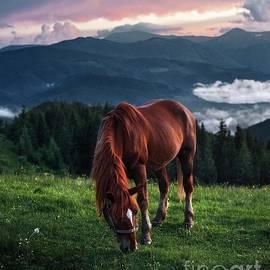 Horse in nature by Julia Bernardes