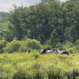 Horse in the field  by William E Rogers