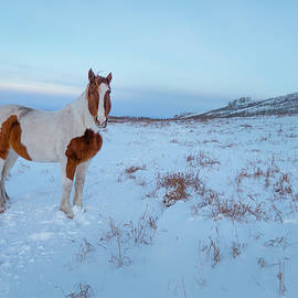 Horse In Winter  by Karen Rispin