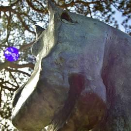 Horse, Un Cavallo  by Neil R Finlay