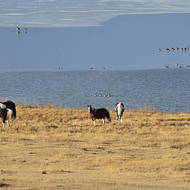 Horses By The Lake by Kae Cheatham