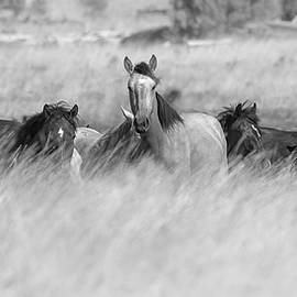 Horses in the Tall Grass. by Paul Martin