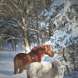 Horses In Winter Snow In The Catskill Mountains by Patricia Keller