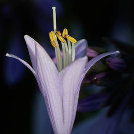 Hosta Closeup by Paul Freidlund