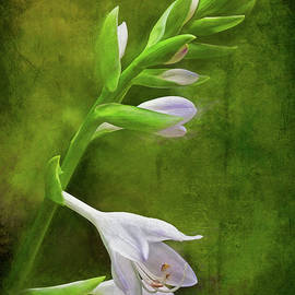 Hosta In Bloom by George Moore